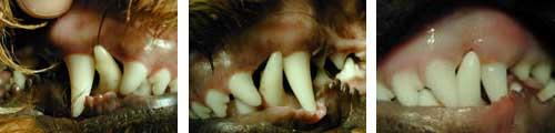Nach Korrektur der Zähne