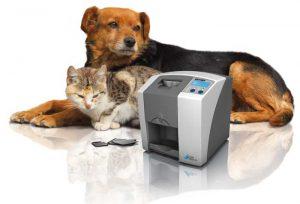 digitalröntgen skilvet cr7 katze und hund